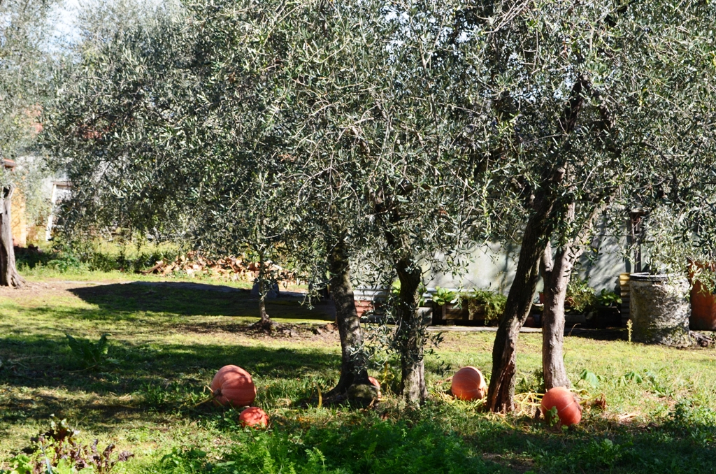 Ligurian olive oil – the Italian gold elixir