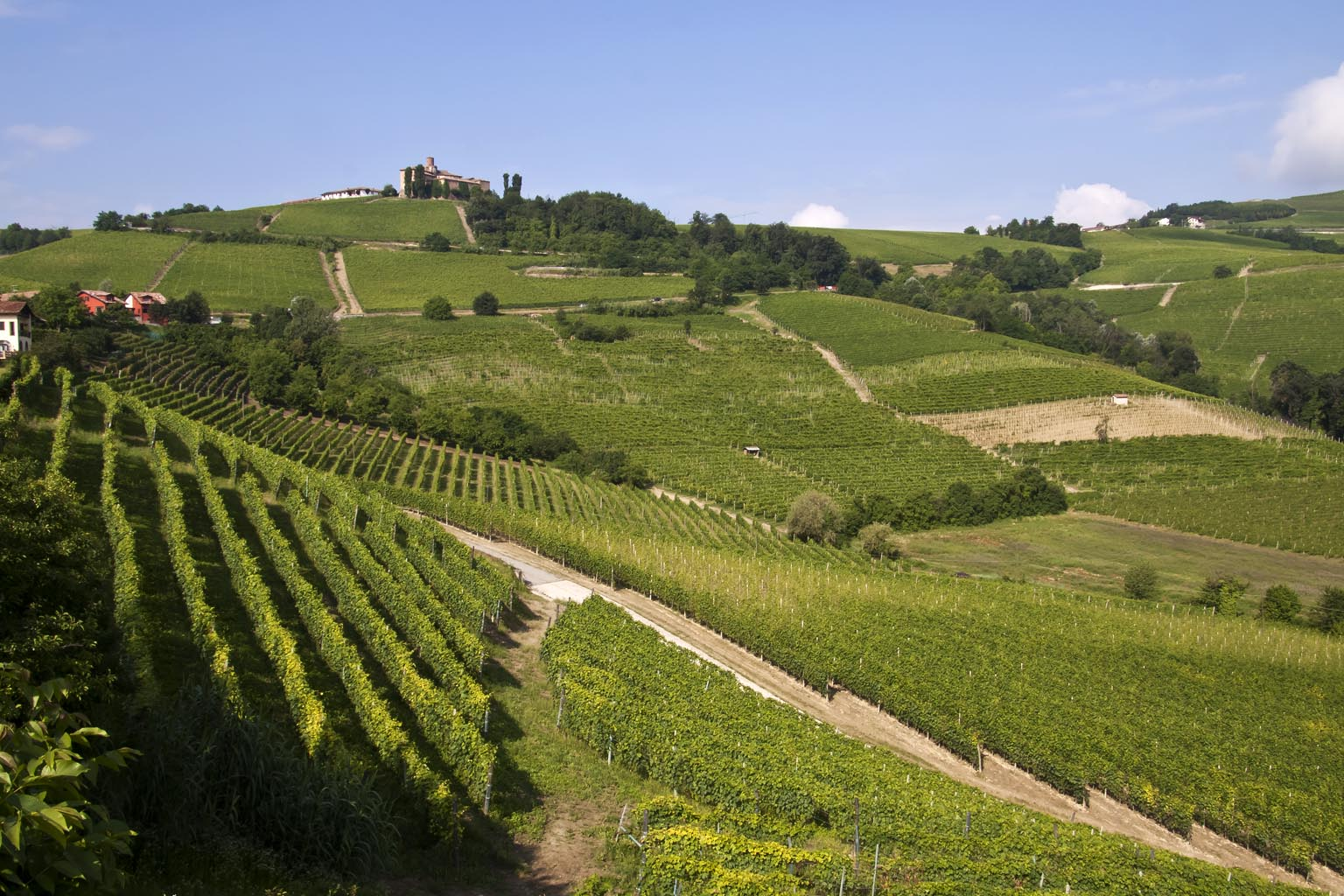 Langhe-rolling-hills-Italy