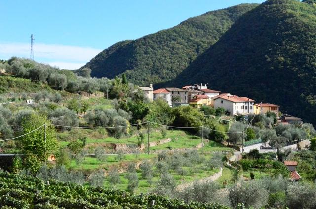 Vineyards in the western Liguria