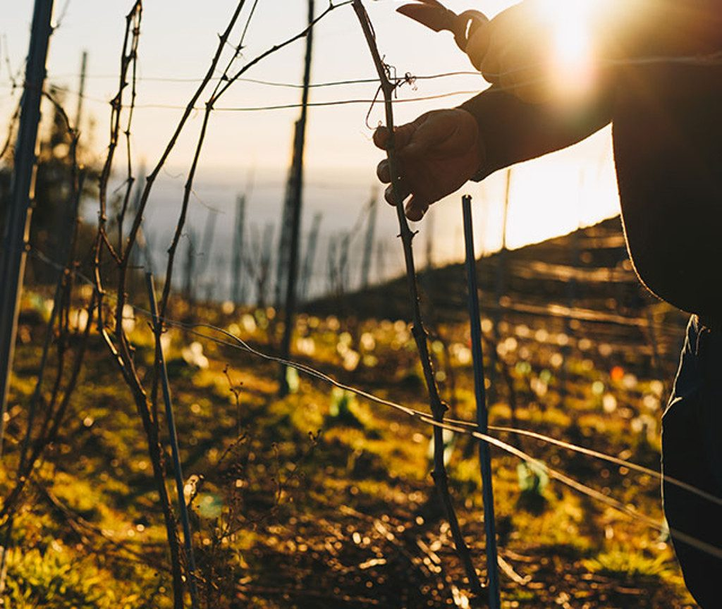 Bonassola Cinque Terre Wine