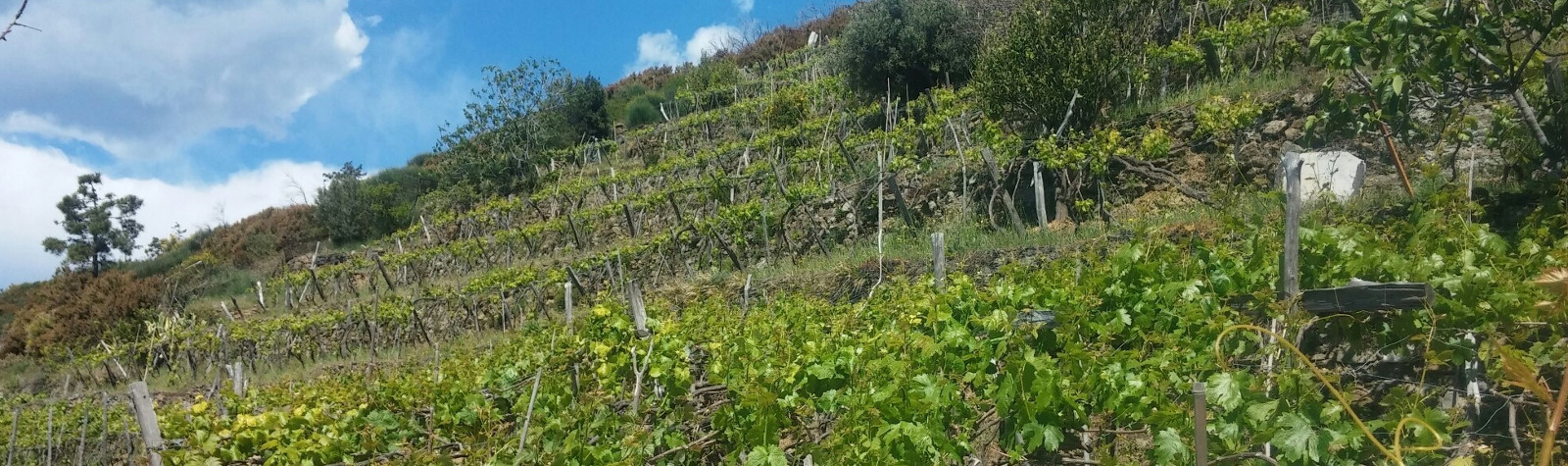 Sustainable Wine Tourism in Bonassola Cinque Terre: interview with a local winemaker