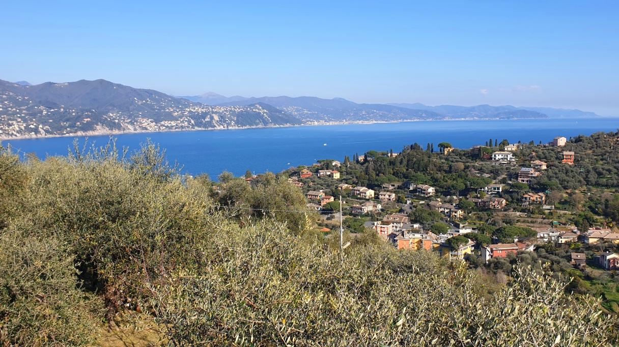 Olive oil tour in Portofino