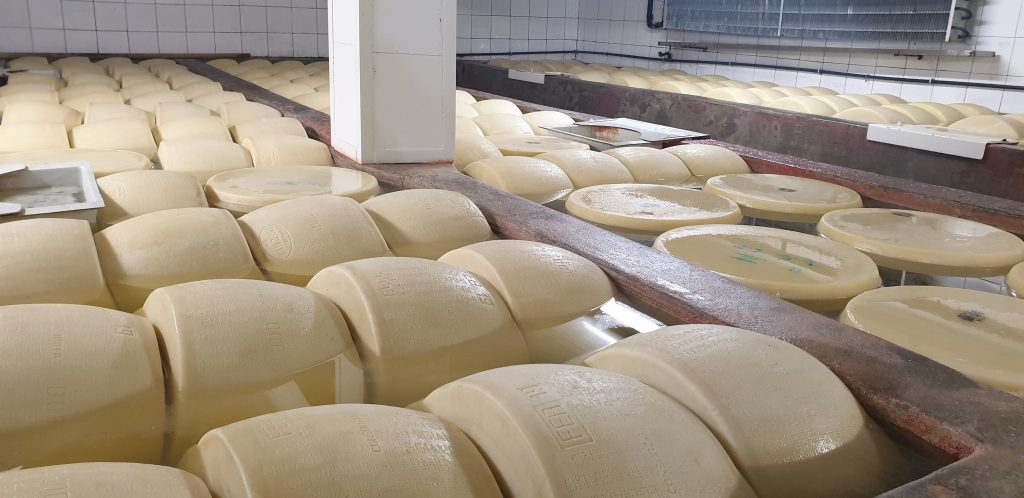 Processing of Parmesan cheese